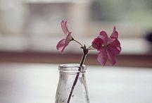 Fresh flowers / Inspirational flower arranging.