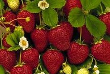 Fruits and Vegetables / Look here for helpful info on growing your favorite edible plants at home!