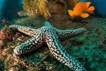 Ocean Life / by 123RF