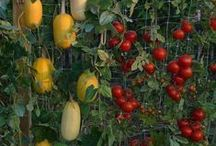 Vegetable Patio Gardening / Find all the advice you need for growing edible plants in limited spaces here!