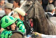 Prix du Jockey Club / Prix du Jockey Club Dimanche 1er juin 2014 - Hippodromes de Chantilly Plus d'informations sur www.prixdujockeyclub.com #JockeyClub