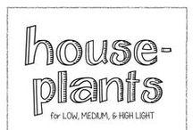 HousePlants / All about houseplants.