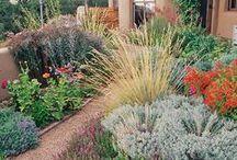 XERISCAPE / Xeriscape Gardening