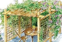 CLIMBERS: Plants and vines for arches, pergolas, and trellis. / Plants and structures for climbing, screens and visual effects.