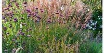 Ornamental Grasses / All about ornamental grasses.