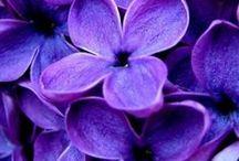 Violet: Pantone colour of 2018