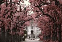 Spring / by Maddie Dreher