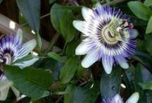 Gardening & Floral art