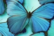 Turquoise / by Katherine Parrott