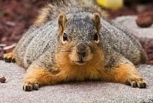 Squirrels / Just squirrels.