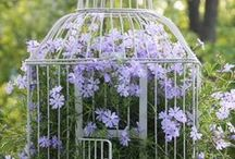 Birdcages / ~ Not just for birds anymore! ~ / by Keller Hastings