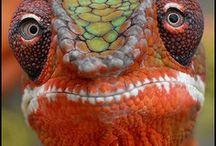 Weird animals / by Michelle Gay