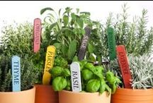 Garden and Yard Money Savers / Save money on your garden, grass, and everything else that grows!