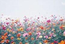 Floral interlude