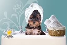 Pampered Pets / Animal and Pet Love!
