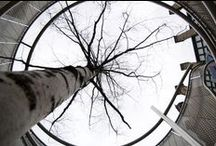 trees...inspiration / by Laura Lipke-Fesser