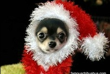 Christmas / by Ann Riley