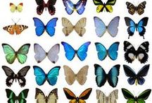 butterfly inspiration / butterflies inspire and trigger ideas for patterns and color palettes. / by Laura Lipke-Fesser
