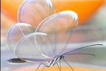 Butterflies / by Ann Riley