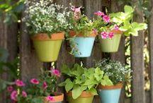 Outdoor Spaces & Gardening
