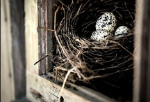 Twig's and Twine's for Egg's to be Nestled / Home's for our feathered friends. Holding their loved ones so dear. / by ~ Nono Bovard ~