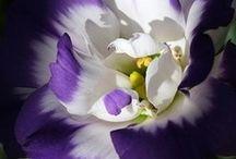 flowers / by Karen Adams
