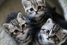 Cats and kittens <3