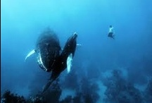 Freediving  /  Exploring the wonderful ocean and more no Tanks style! #freediving -  the beauty #underwater