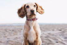 Urlaub mit Hund  / Alles rund um das Reisen mit Hund: Roadtrips, hundefreundliche Hotels oder Strände #Hund #Hunde #Urlaub