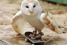 Animals on skateboads