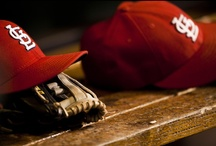 We are Cardinal Nation / by Crystal Weber