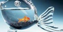 ~.~ Aquarium ~.~ Ενυδρεία ~.~