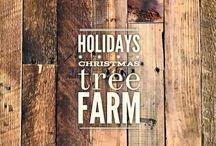 holidays :: Christmas tree farm