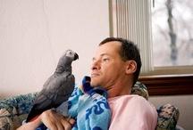 Alt Service Animals - Parrots