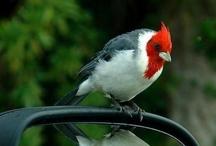 Birds of a Feather / by Martha Coffey