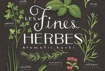Working with Herbs