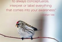 Eckhart Tolle / Eckhart Tolle quotes, articles, videos and reflections.