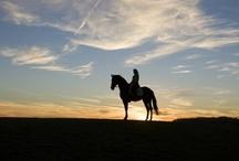 Horses~Horses~Horses / by AjantaJudd