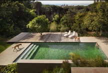 Bridle Road House | Rees Roberts + Partners | Cape Town, South Africa / Below the house is the main Fynbos garden with its outdoor living areas and natural swimming pool. Fynbos is a highly diverse heathland vegetation native only to a small belt of the Western Cape. The design used these endangered native plantings as the basis for a domesticated landscape, bringing them back down from Table Mountain and weaving them throughout the garden. The visual centerpiece is the natural swimming pool framed by its local balau wood deck. / by Design Life