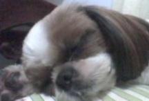 Doogiedoo :) / My adorable pets!