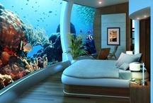 Aquascapes & Fish