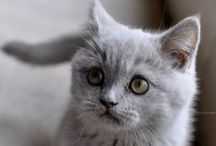 Cute n Furry