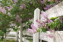 Time To Smell The Lilacs... / by Ar Families