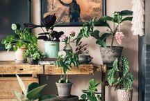 Potted Pretties / Indoor plants