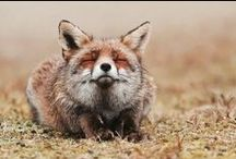 fox totem / emblematic of quick thinking, adaptability and cunning / a wonderful totem for tricky situations