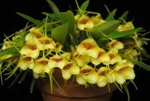 Orchid plants / by Glenn Bryant