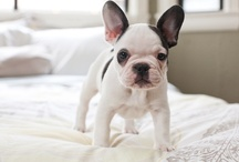 | FRENCHIES |