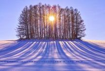 Winterful World / Welcome, please pin all that you enjoy! / by Julie McCormick