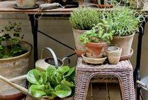 kaikki mitä aloittelevan puutarhurin tulee tietää / Kukkaloistoa, parveke-istutuksia, kaupunkiviljelmiä ja muuta viherpiiperrystä sydämellä - helposti.