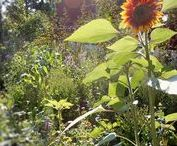 Urban Food Forests / Multi-functional self-sustaining edible forests in an urban context